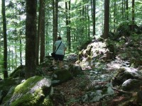 inzell sommer wald am krottensee2